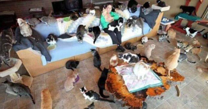 tanti gatti vivono in casa