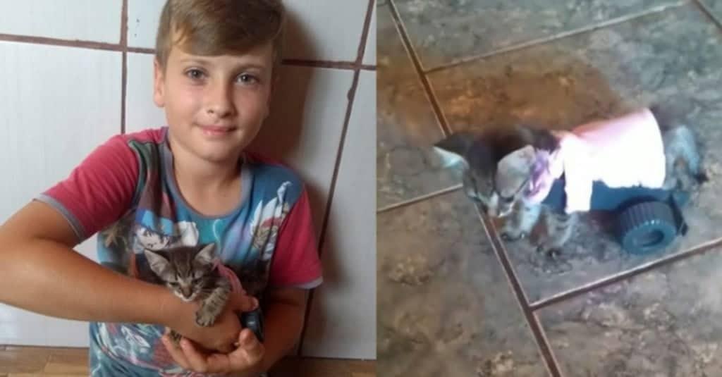gattino cammina grazie a un bambino