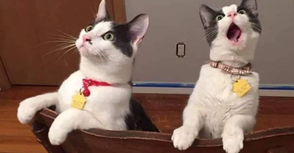 gatto-rimane-sorpreso
