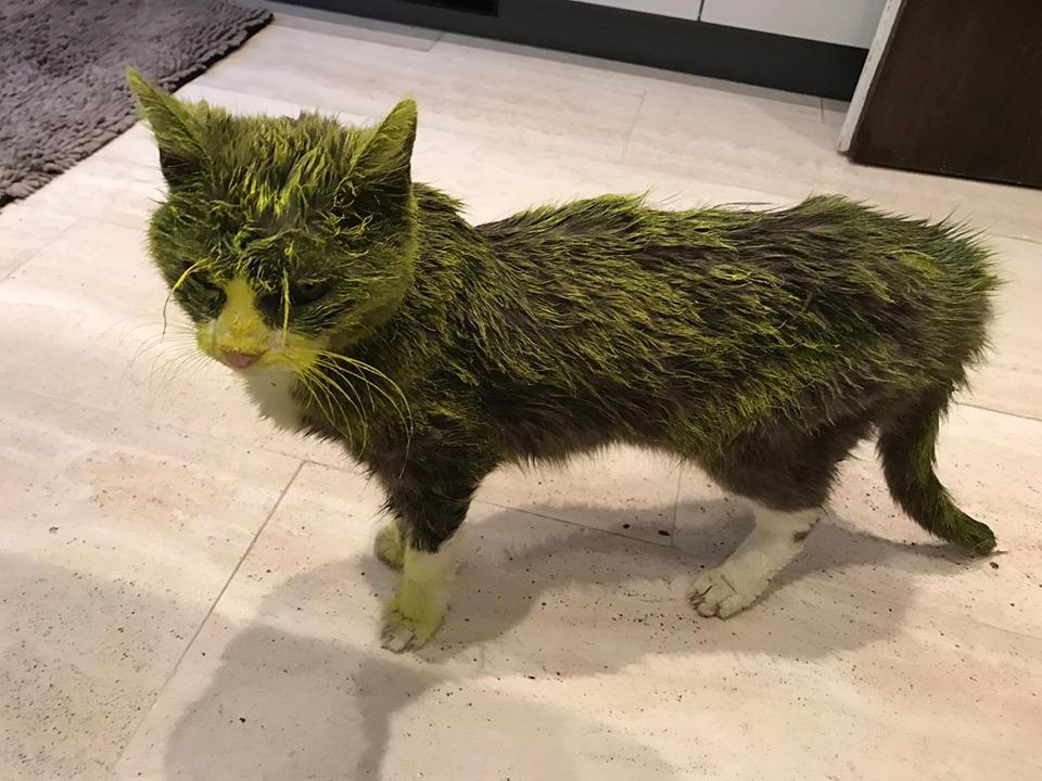 gatto verniciato