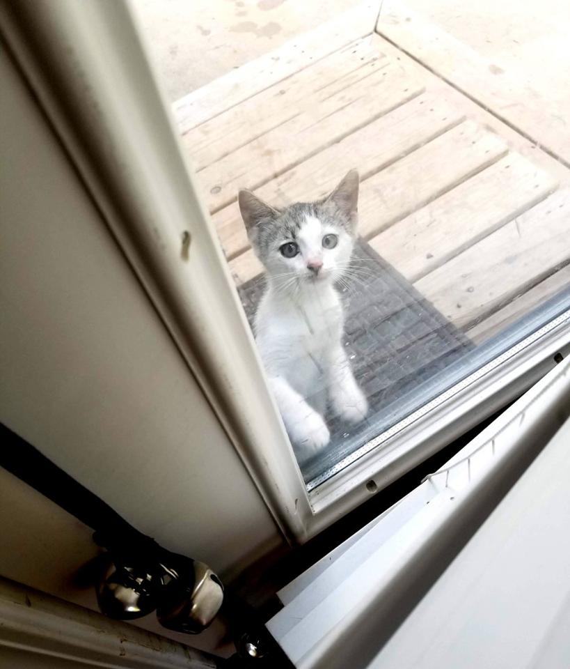 gattino vuole entrare in casa