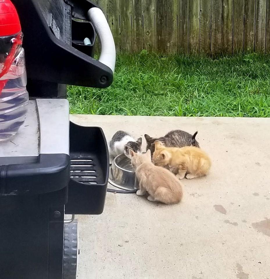 quattro gattini mangiano