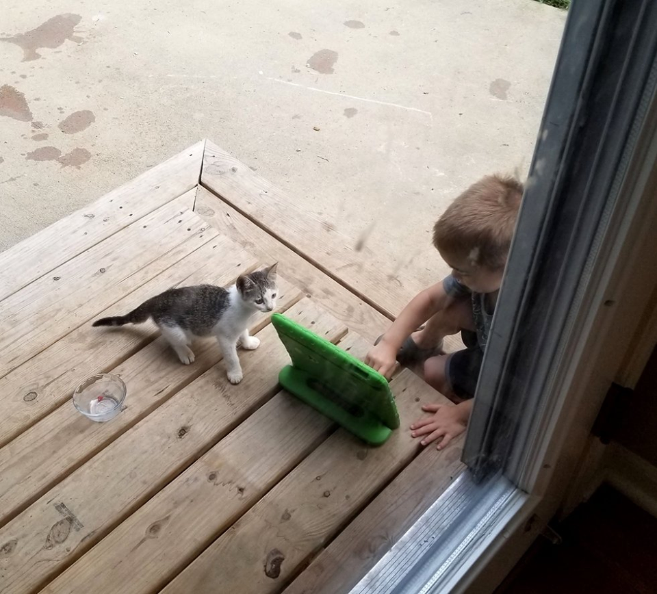 gattino gioca con bambino
