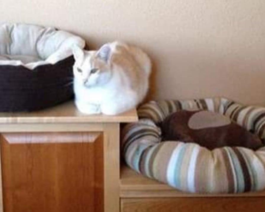 gatto-tra-due-cucce