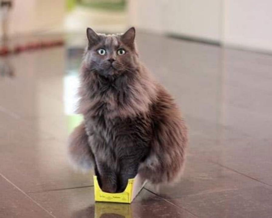 gatto-nella-scatolina