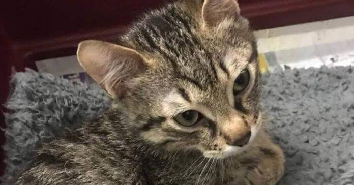 gattino danno neurologico