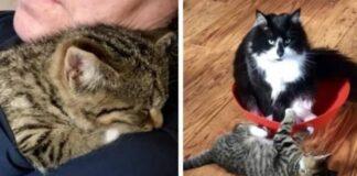 gattino-trova-amico