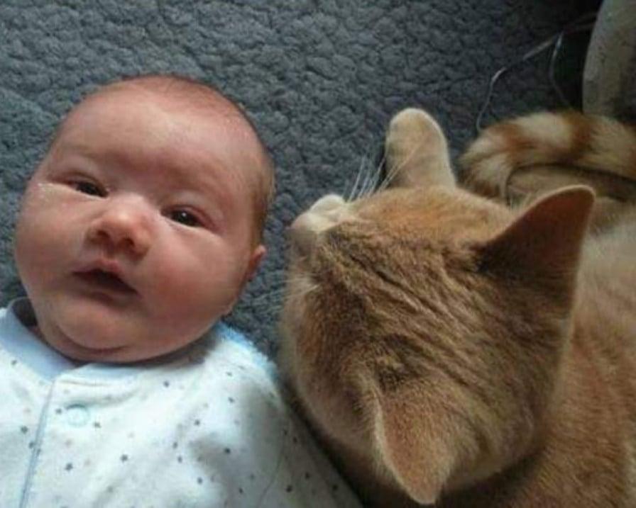 gatto-protegge-bambino