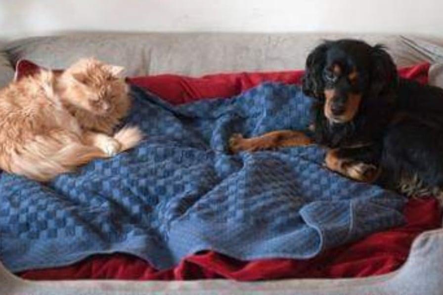 cane e gatto salvati