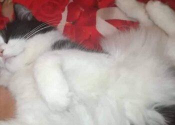 gattina si rotola sul letto