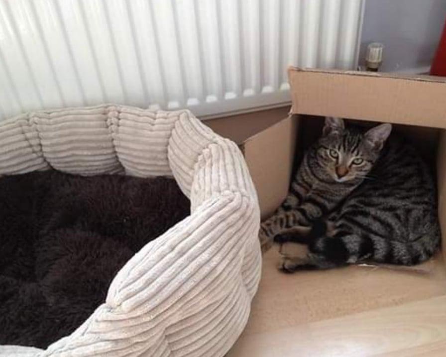 gatto-preferisce-la-scatola