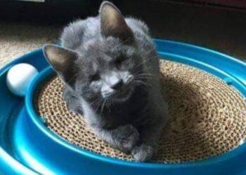 gattino cieco guarda in modo diverso