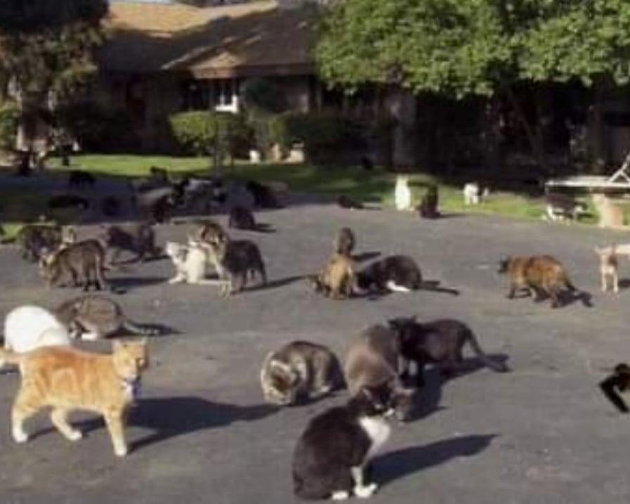 mille gatti in una villa