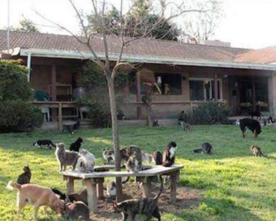 tanti gatti in giardino