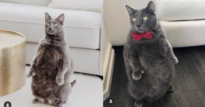 gatto che sta in piedi