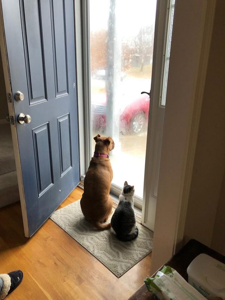 cane e gatto aspettano