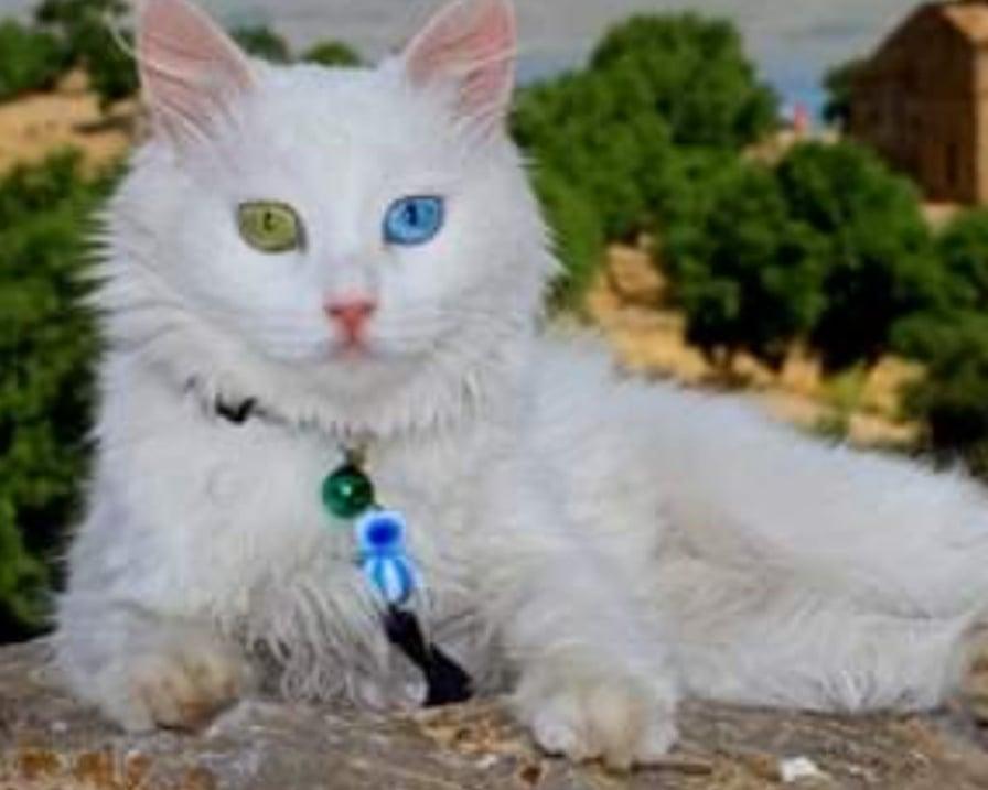 spak il gatto piu bello del mondo 2019