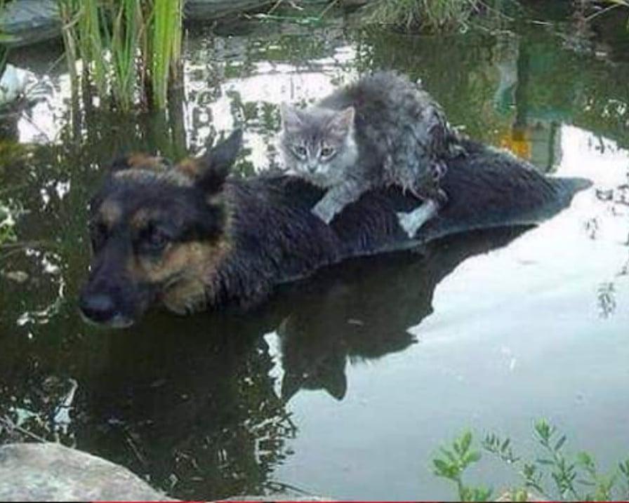 cane-salva-gatto