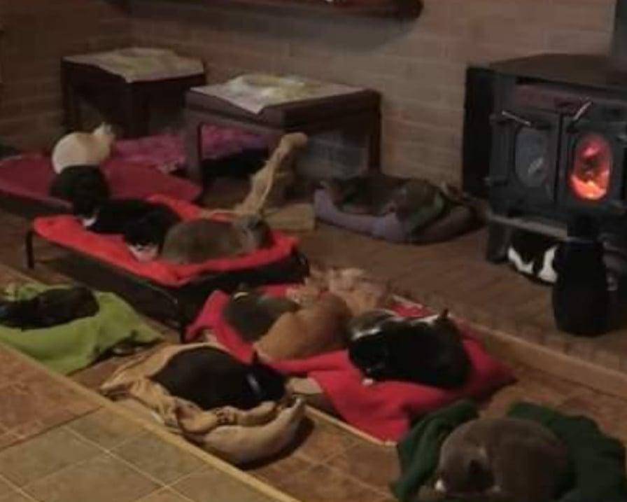 gatti davanti alla stufa