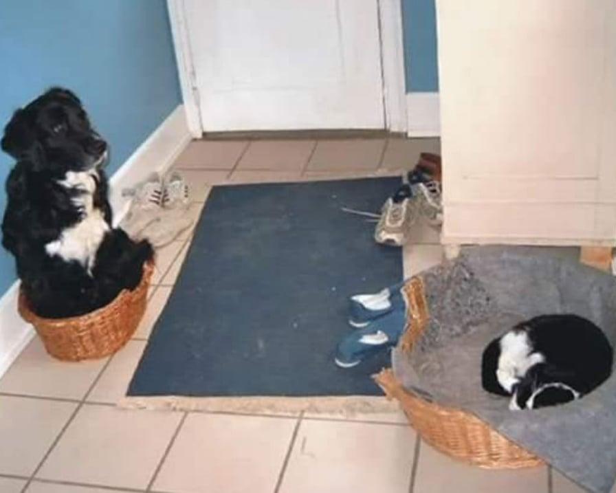 gatto e cane si scambiano le cucce
