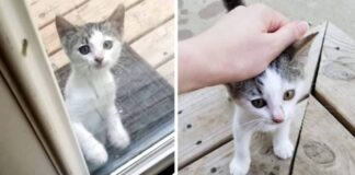 gattina-trova-casa