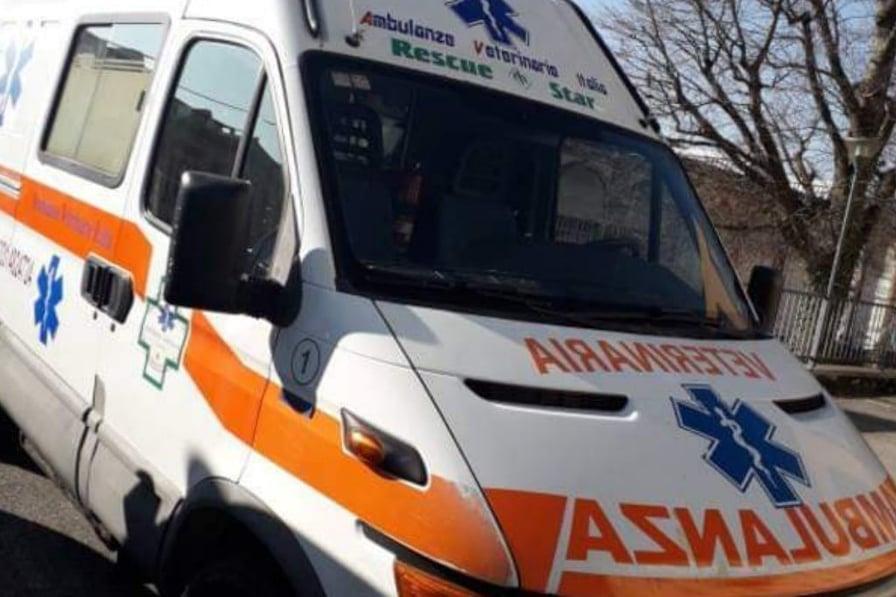 ambulanza veterinaria varese
