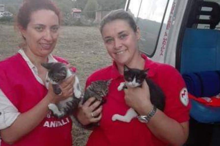 volontarie salvano gattini