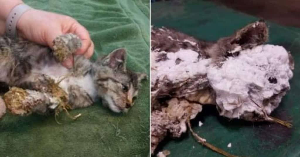 gatto salvato in extremis