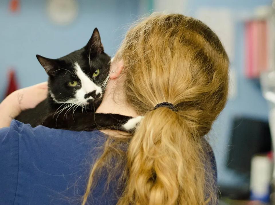 gatto abbraccia donna