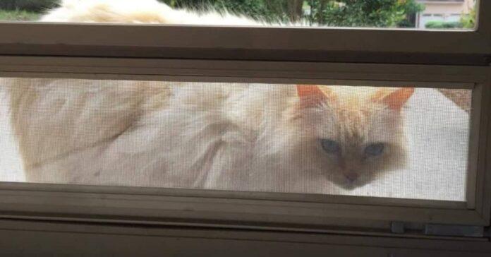 gatto dei vicini