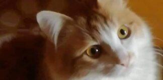 gatto guarda incantato