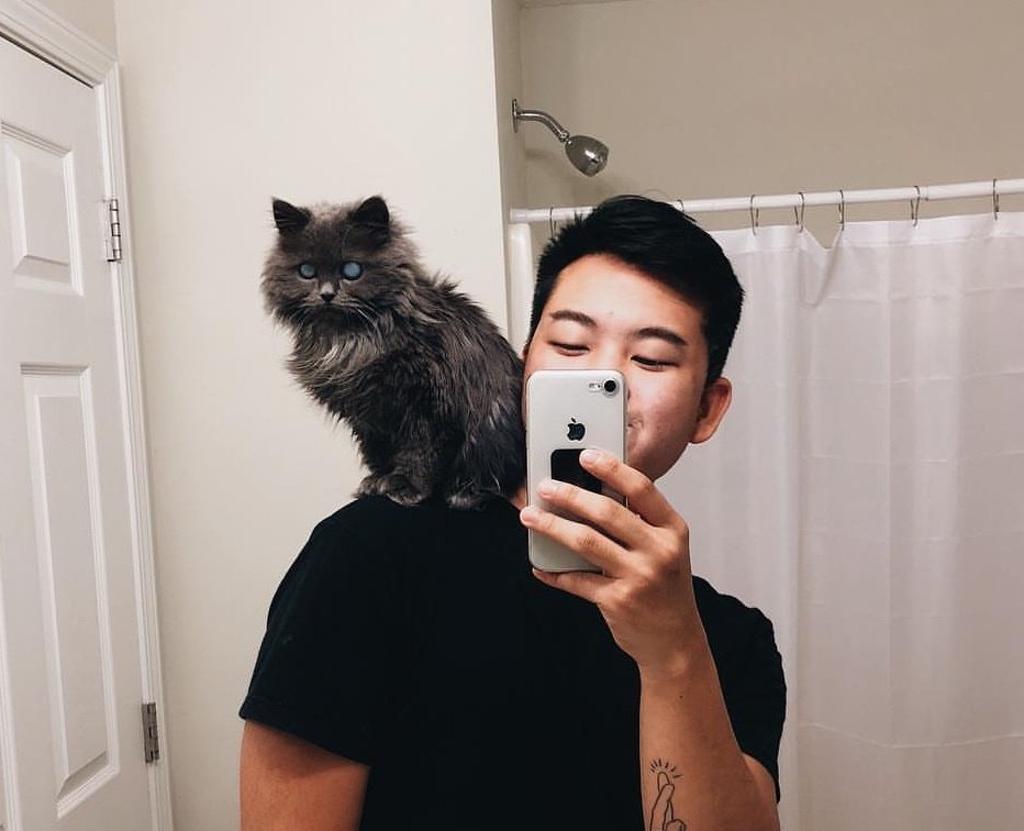 gatto cieco selfie allo specchio