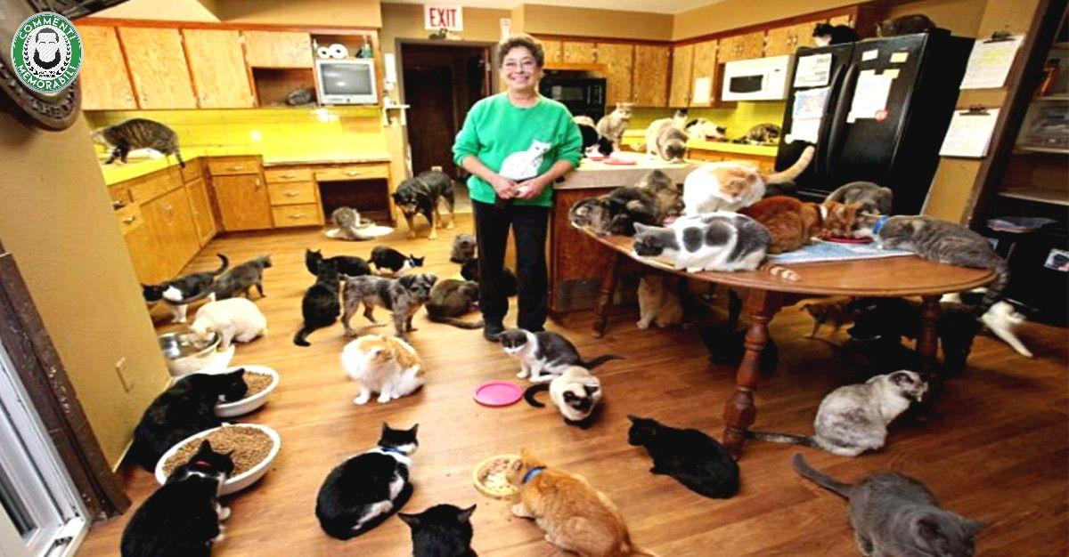 donna sfama i gatti