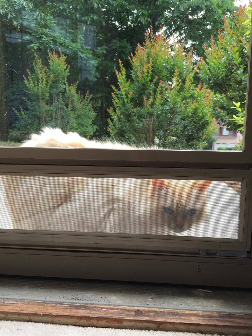 gatto sbircia dalla finestra
