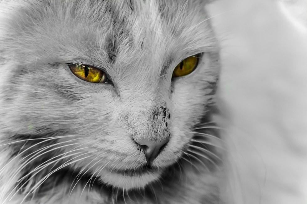gatto-occhi-magnetici