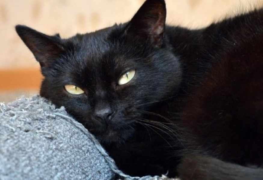 gatto-nero-museo