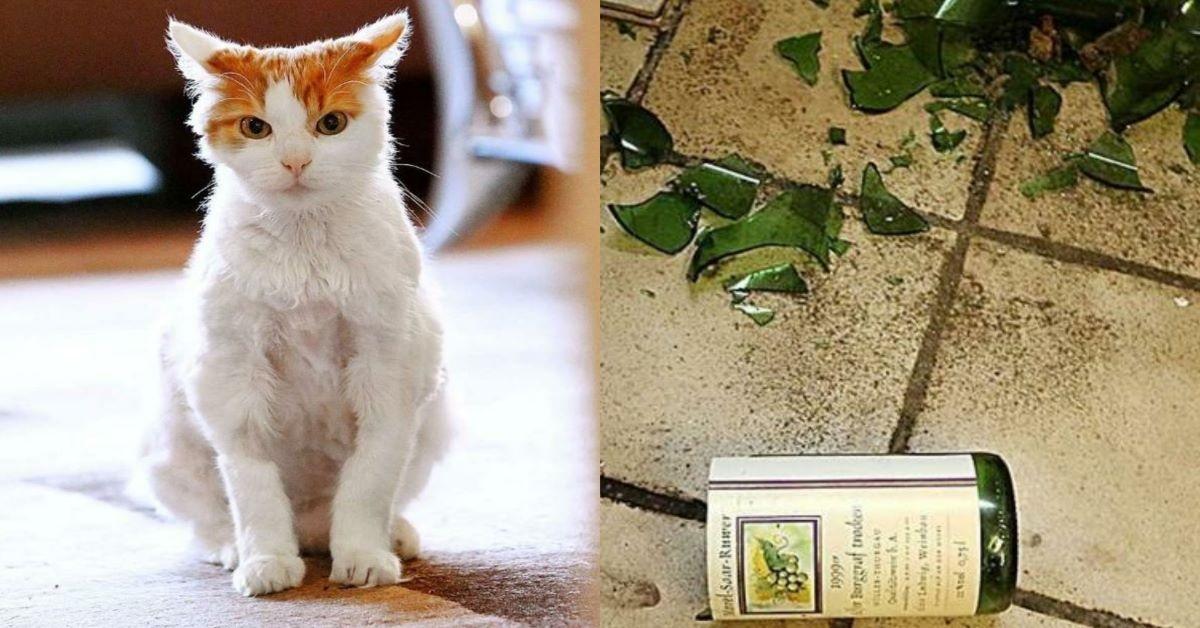 Aljosha Il Gatto Trovato Ubriaco Il Mio Gatto è Leggenda