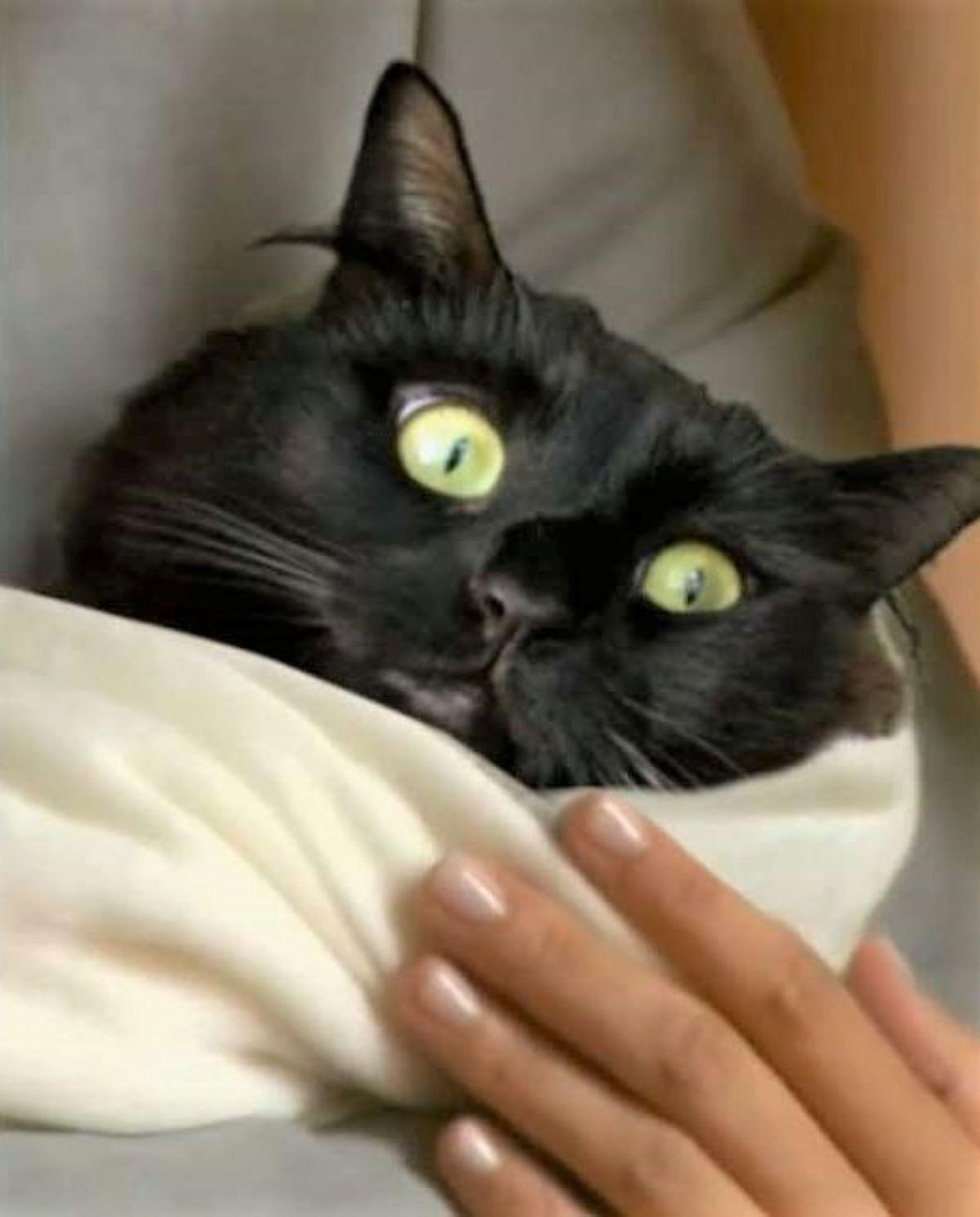 gatto-nero-come-bambino