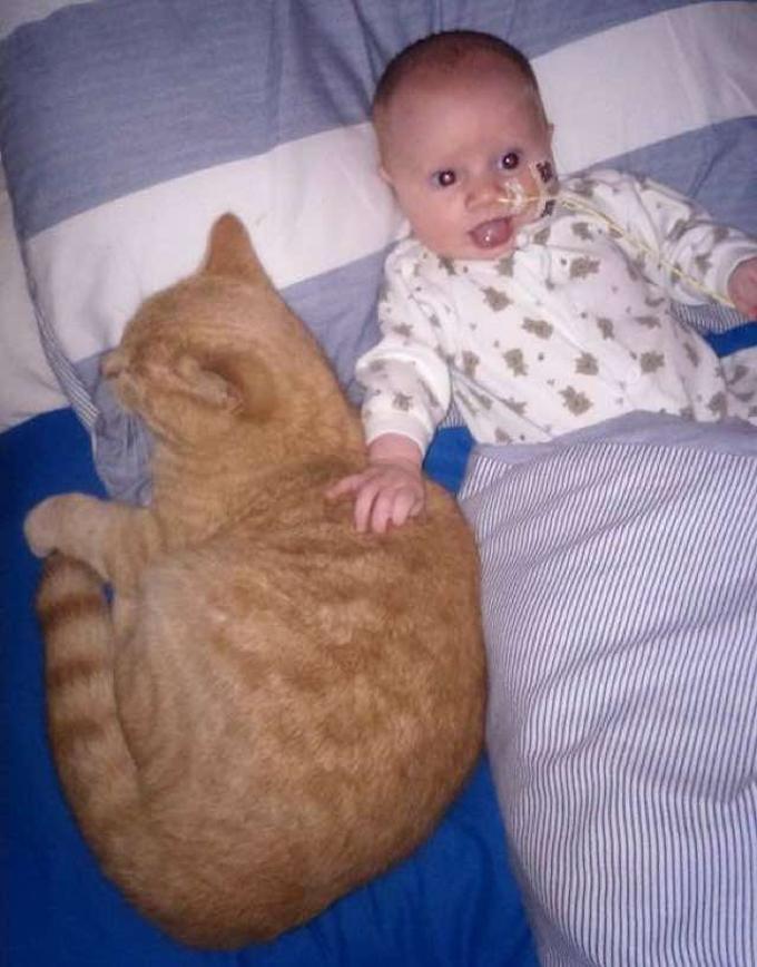 bimbo-e-gatto
