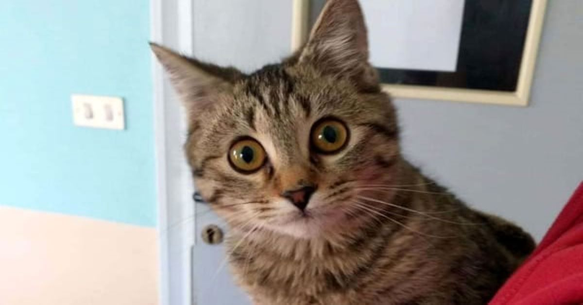 gattino-con-sguardo-sveglio