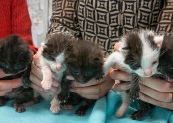 Cinque cuccioli di gatto