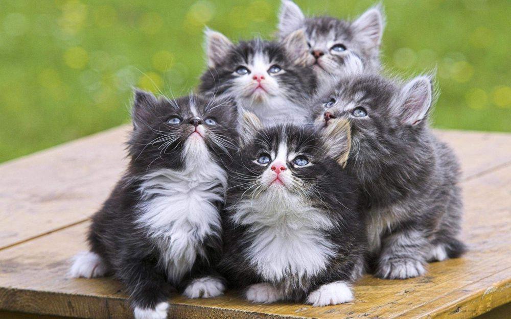 Cinque cuccioli di gatto che guardano in alto