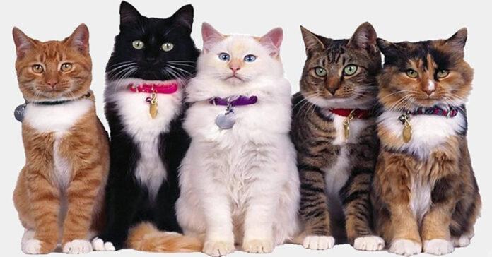 Cinque gatti in posa