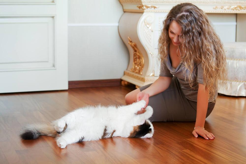 giocare con gatto