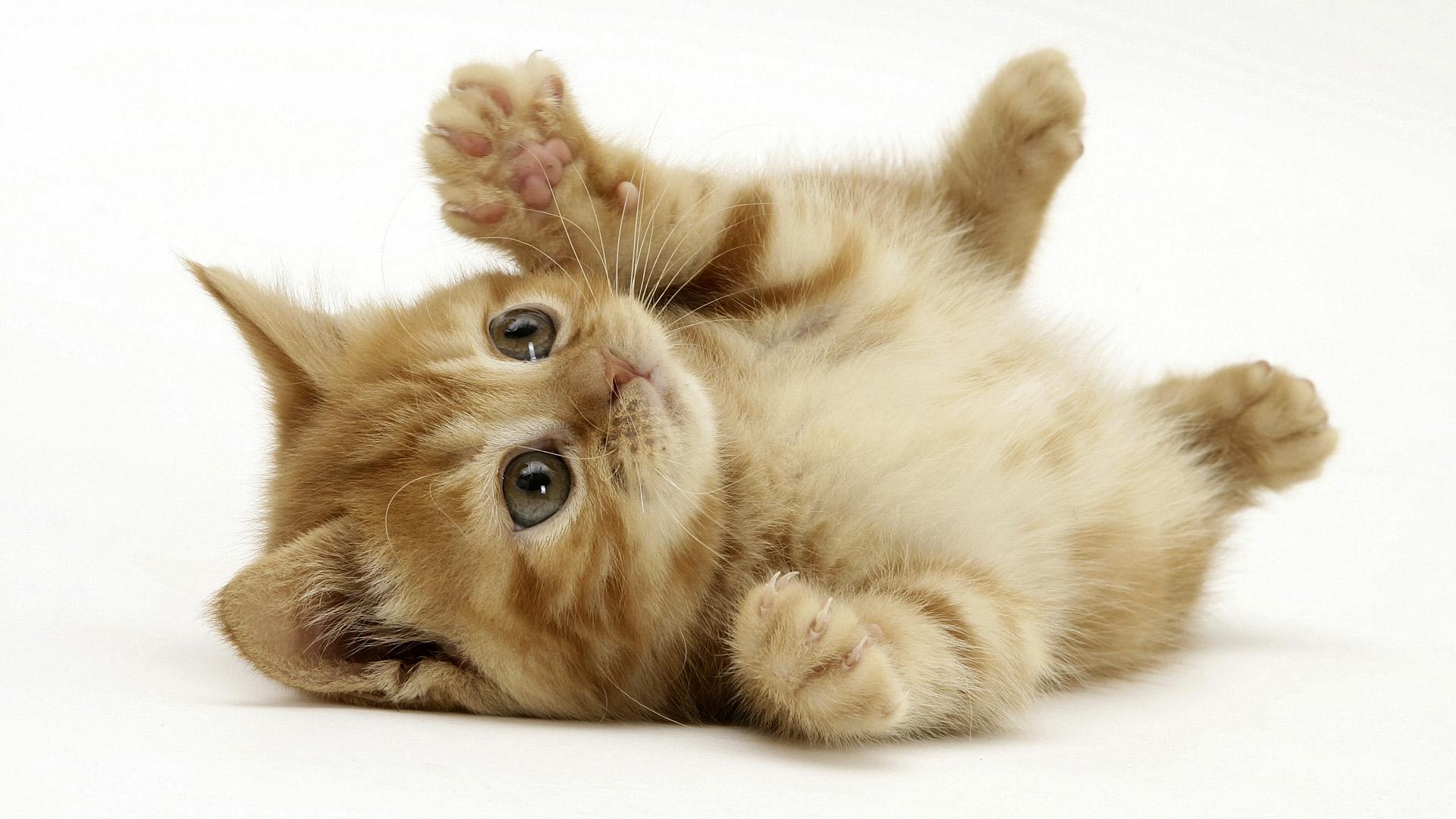 Cuccioli di gatto sdraiato sulla schiena