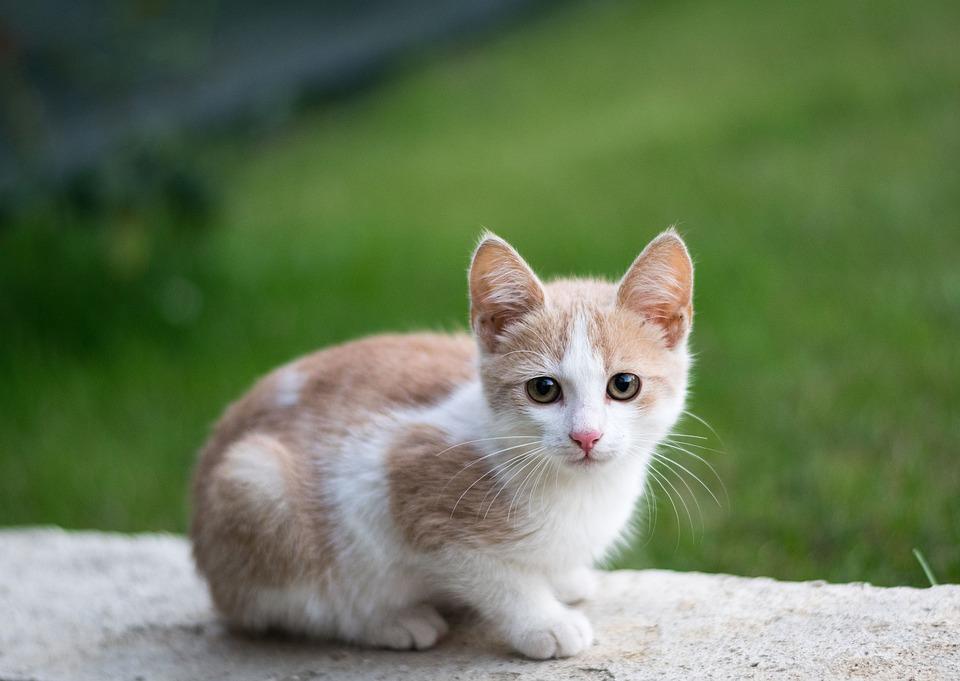 Cucciolo di gatto su un muretto