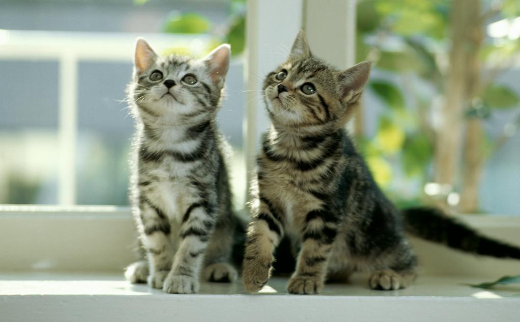 Due cuccioli di gatto