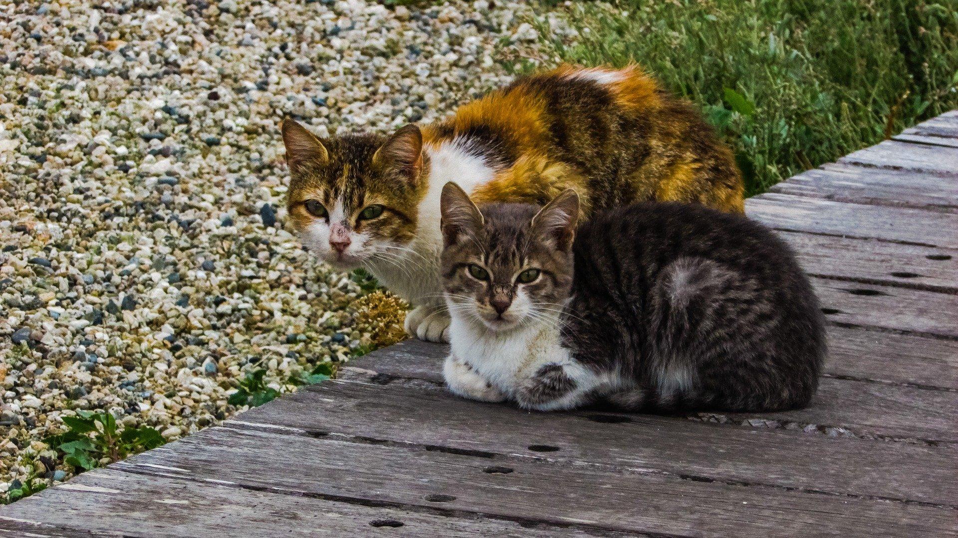 Due gatti accucciati
