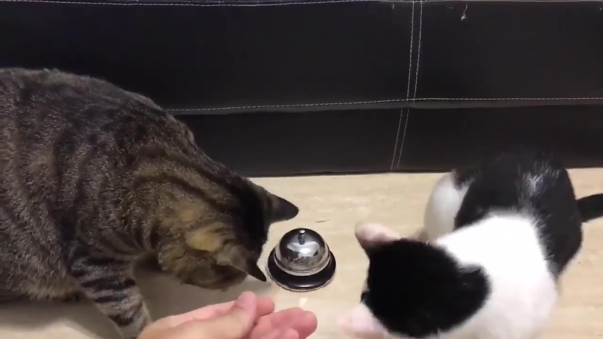 Due gatti e un campanello