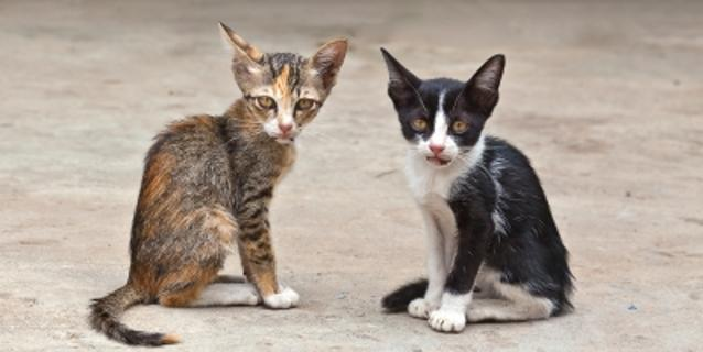 Due gatti randagi